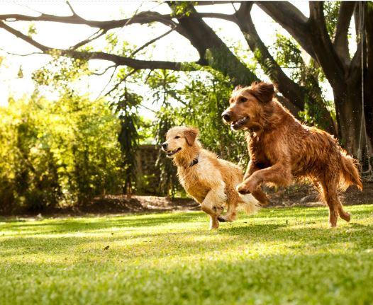Image result for dog park