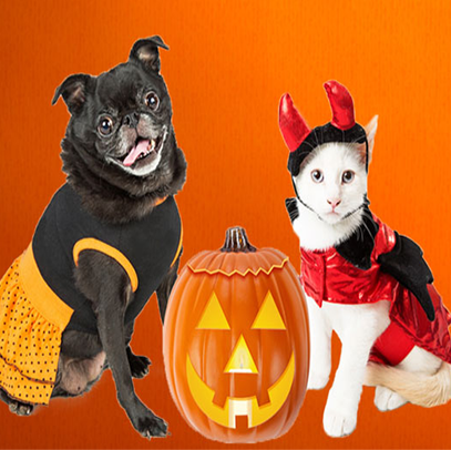 PetCostumeContest